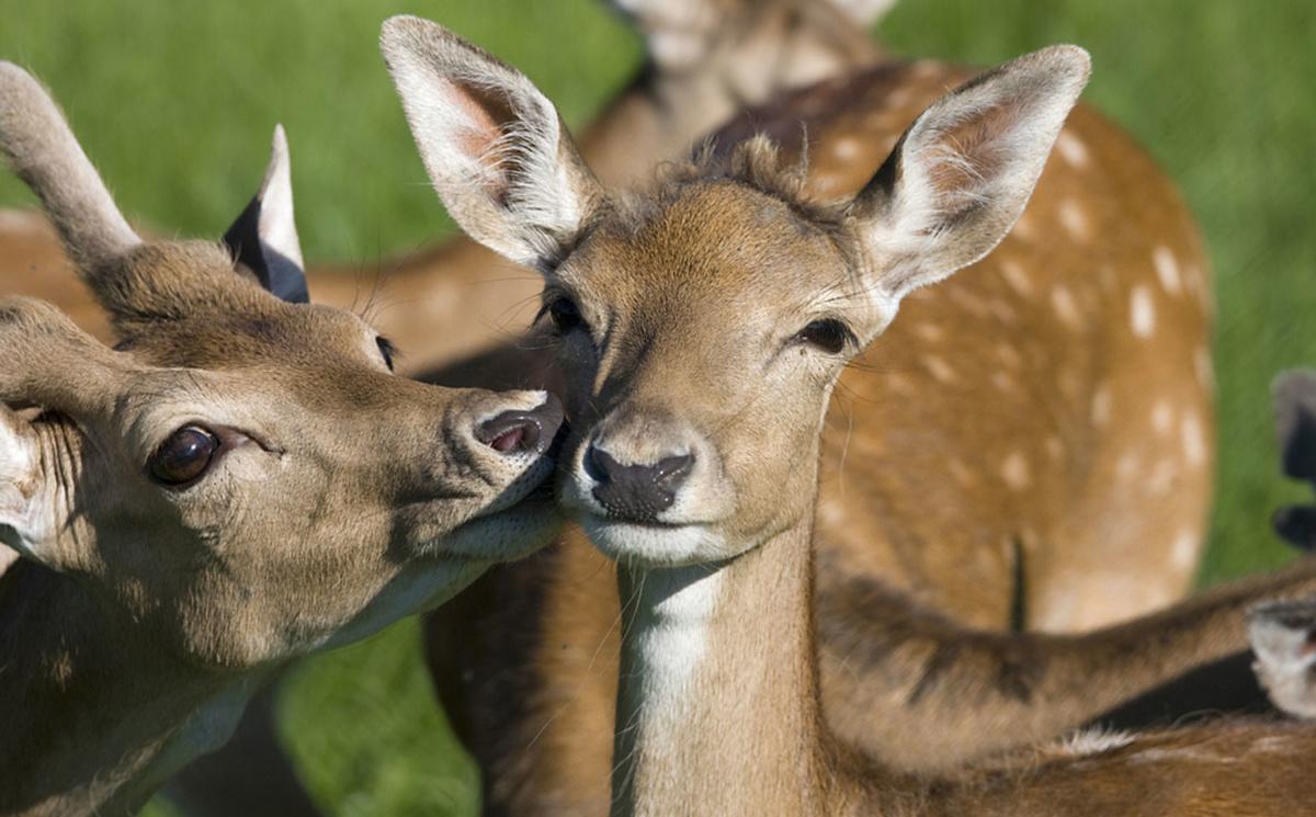 Wildpark Untertauern - Ausflugsziele vom Salzburger Hof aus