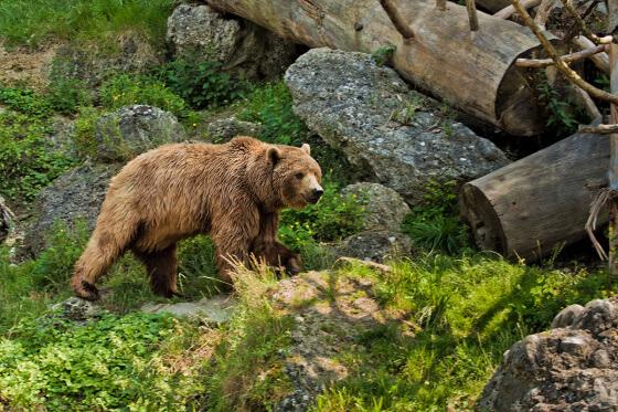 Zoo Salzburg - Ausflugsziele vom Salzburger Hof aus