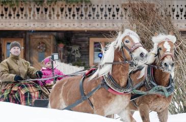 Pferdeschlittenfahrten in Altenmarkt - Zauchensee