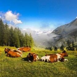 Sommerurlaub in Zauchensee, Toplage